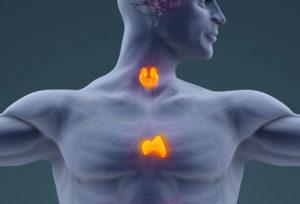 Thymus VS Thyroid